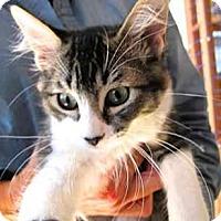 Adopt A Pet :: Elmo The Girl - Davis, CA
