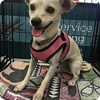 Adopt A Pet :: Flower - Tucson, AZ