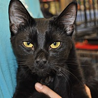 Adopt A Pet :: Thalia - La Canada Flintridge, CA
