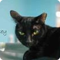 Adopt A Pet :: Rosey - Middleburg, FL