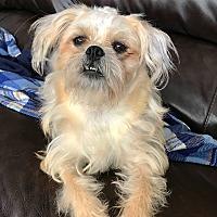 Adopt A Pet :: LB - Los Alamitos, CA