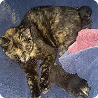 Adopt A Pet :: SPECTACULA - Hampton, VA