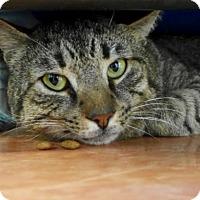 Adopt A Pet :: Seuss 34792734  **Pet With Perks** - Westampton, NJ