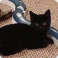 Adopt A Pet :: DIAMOND - 2013 - Hamilton, NJ