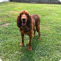 Adopt A Pet :: Beauregard - Geismar, LA