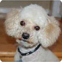 Adopt A Pet :: Tuffie - Rigaud, QC