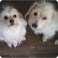 Adopt A Pet :: MILO - Houston, TX