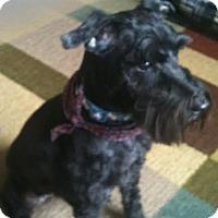 Adopt A Pet :: Fritz - Crystal River, FL