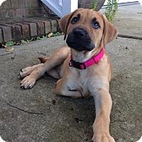 Adopt A Pet :: Maggie - Mount Laurel, NJ