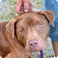 Adopt A Pet :: Diesel - Bakersville, NC
