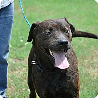Adopt A Pet :: Ralph in CT - Manchester, CT
