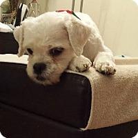 Adopt A Pet :: Bert - Hamilton, ON