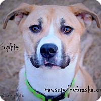 Adopt A Pet :: Sophie - Wymore, NE