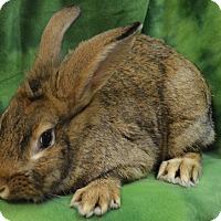 Adopt A Pet :: Twitch - Evansville, IN