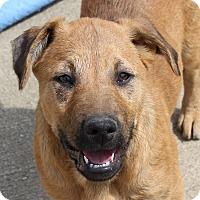 Adopt A Pet :: Grace - kennebunkport, ME