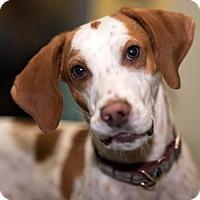 Adopt A Pet :: Josh - Richmond, VA