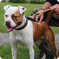 Adopt A Pet :: Tootsie - Elyria, OH