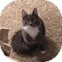 Adopt A Pet :: Joel - Vancouver, BC