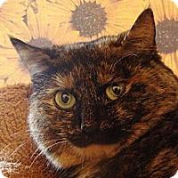 Adopt A Pet :: Tashi - Albany, NY