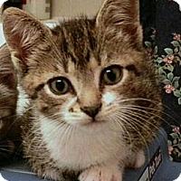 Adopt A Pet :: Fiona - Reston, VA