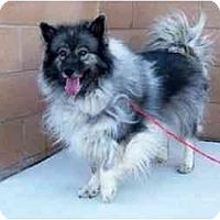 Adopt A Pet :: Sophie - Los Altos, CA