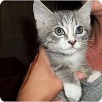 Adopt A Pet :: Denali - Acme, PA