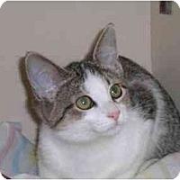 Adopt A Pet :: Camilla T. Chicken - Lombard, IL