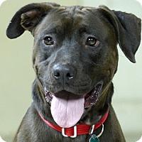 Adopt A Pet :: Jasper--RESCUED! - Marlinton, WV