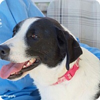Adopt A Pet :: Gracie Mae - Knoxville, TN