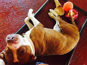 Pit Bull Terrier/Hound (Unknown Type) Mix Dog for adoption in North Haledon, New Jersey - Greta