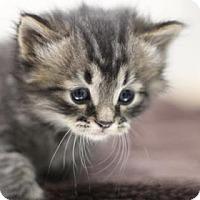 Adopt A Pet :: Kevin - Walla Walla, WA