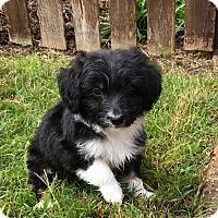 Adopt A Pet :: Curly - Waco, TX