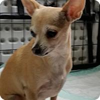 Adopt A Pet :: Coy - Jackson, MO