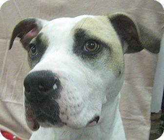 Terrier (Unknown Type, Medium) Mix Dog for adoption in Lake Odessa, Michigan - Tessie