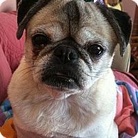 Adopt A Pet :: Bella - Hinckley, MN