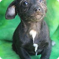 Adopt A Pet :: Gladys Knight - Wytheville, VA