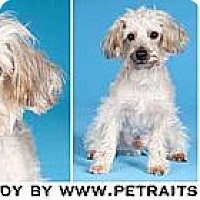 Adopt A Pet :: Buddy - Chicago, IL