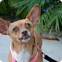 Adopt A Pet :: Cassidy - Mission Viejo, CA