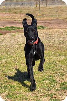 Labrador Retriever Mix Dog for adoption in Quinlan, Texas - Grace