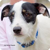 Adopt A Pet :: Bonnie - Knoxville, TN