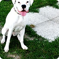 Adopt A Pet :: Luna Lee-Adopted! - Turnersville, NJ