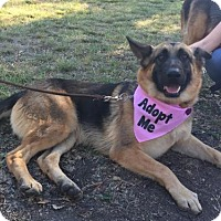 Adopt A Pet :: Asami - San Diego, CA