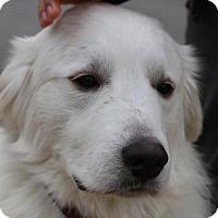 Adopt A Pet :: Finn - Garland, TX