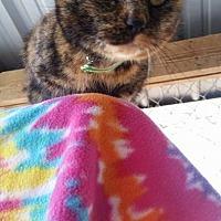 Adopt A Pet :: Isis - Pittsburg, KS
