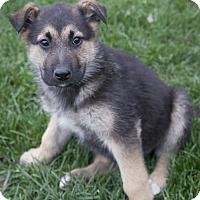 Adopt A Pet :: Reno - Bedford, IN