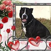 Adopt A Pet :: Rocco - Tipp City, OH
