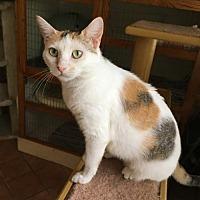 Adopt A Pet :: Lily - Frisco, TX
