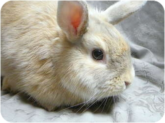 Other/Unknown Mix for adoption in Newport, Delaware - Albus