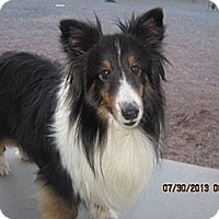 Adopt A Pet :: Christy - apache junction, AZ
