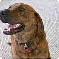 Adopt A Pet :: Braveheart - Byrdstown, TN